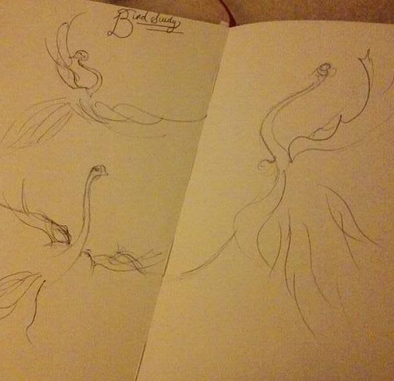 birdstudy.jpg